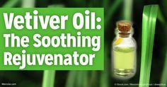 Learn more about vetiver oil – its uses, benefits, and composition – and how it can help uplift your health.