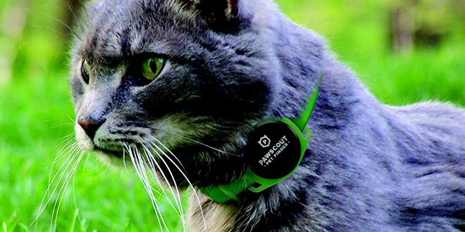 This App Uses Your Neighbors� Phones to Find Your Lost Pet