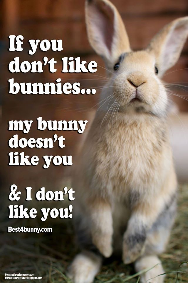 If you don't like bunnies... we don't like you! http://best4bunny.com/