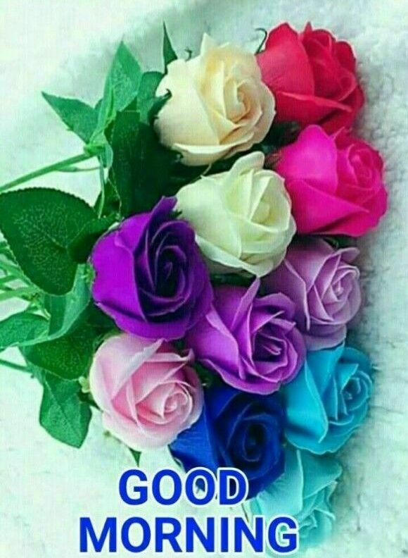 Good Morning Quotes With Roses : Good morning colourful roses mulțumiri pinterest