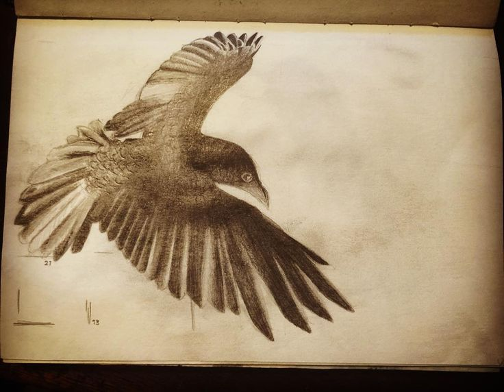 Old pencil drawing of a crow. #crow #pencil #drawing #pencildrawing #olddrawings