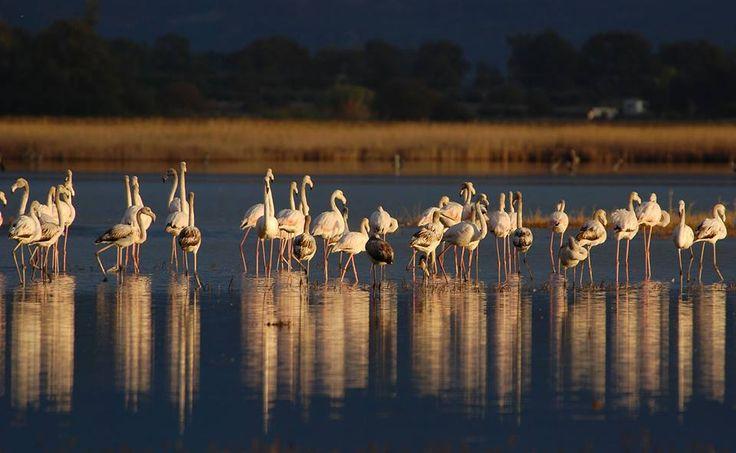 TRAVEL'IN GREECE I Gialova lagoon in the evening, #Messinia, #Greece, #travelingreece