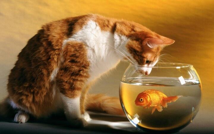 Mr Cat...