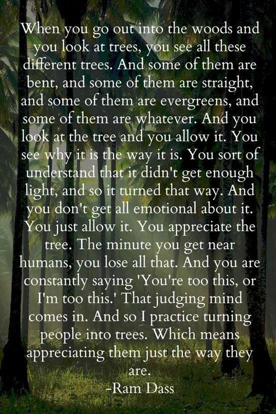Rumi Trees