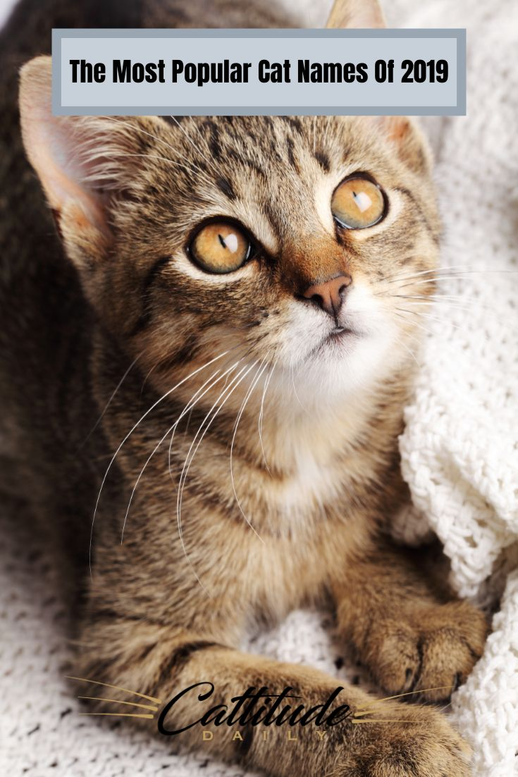 2019's Most Popular Cat Names Revealed Cat names, Most