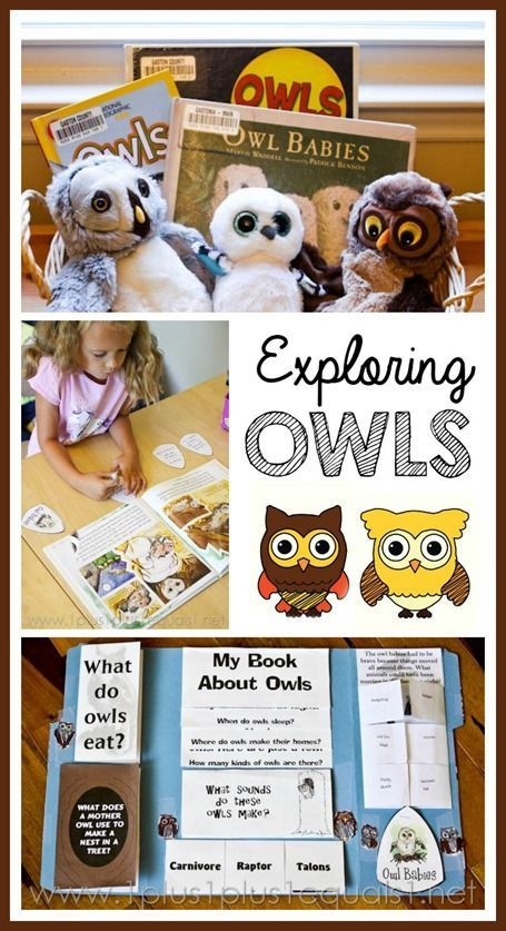 This FREE Owl Unit Study and Lapbook is a fun, hand on way to learn about Owls. This includes printables, lapbook instructions and printables and lesson ide