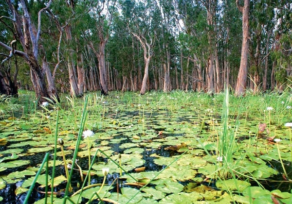 Mary River floodplain is abloom with water lilies and paperbarks.