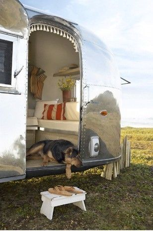 airstream and a dog
