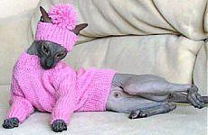 Вязаная одежда для кошек своими руками   Донецкий сайт по рукоделию   вязаная одежда для кошек своими руками, одежда для котят своими руками, выкройки одежды для кошек, вязаная одежда для кошек, как связать одежду для кошки, одежда для кошек своими руками выкройки, одежда для котов своими руками, одежда для кошек своими руками, Вязаная одежда для кошек своими руками