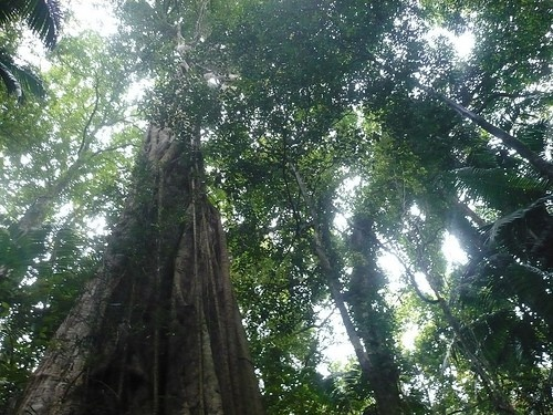 Sun shining through tropical rainforest canopy.