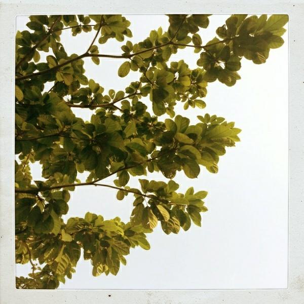Leaves...: Leaves, Random Shots
