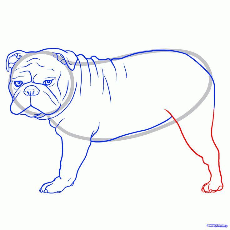 42 best Bulldog painting images on Pinterest   Anatomy, Anatomy ...