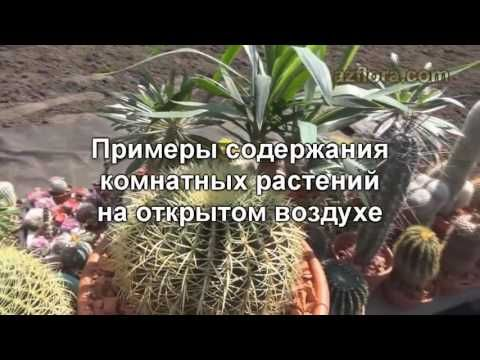 Комнатные растения: советы по содержанию на открытом воздухе - YouTube
