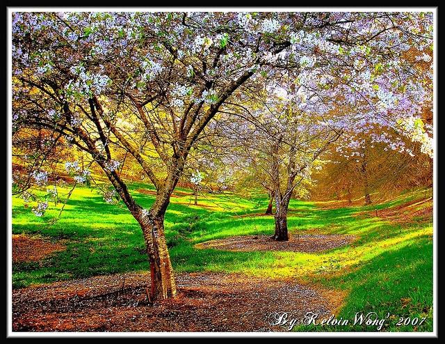 17 best images about australian spring gardens on for Garden trees adelaide