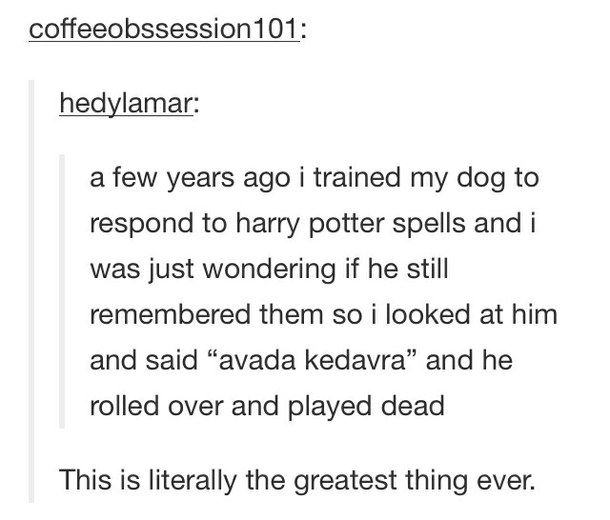 dog, funny, harry potter, text post, tumblr - image #2423789 by ...