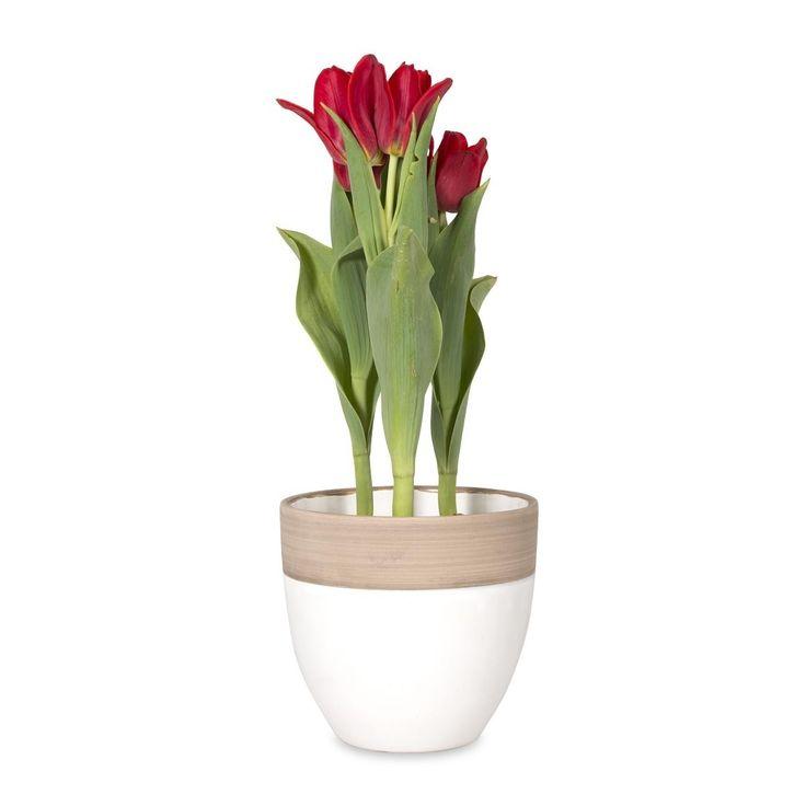 Tulips in Ceramic