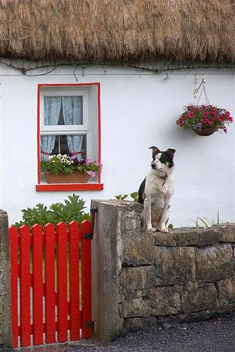 Red gate at an Irish country cottage. I guess the dog is waiting for someone to come home.