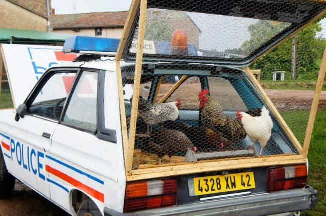 Hahaha, Mobil Polisi Ini Berubah Jadi Kandang Ayam - Vivaoto.com - Majalah Otomotif Online