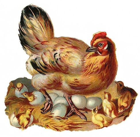 Vintage Chicken Clip Art | Clip Art from Vintage Holiday Crafts » Blog Archive » Free Vintage ...