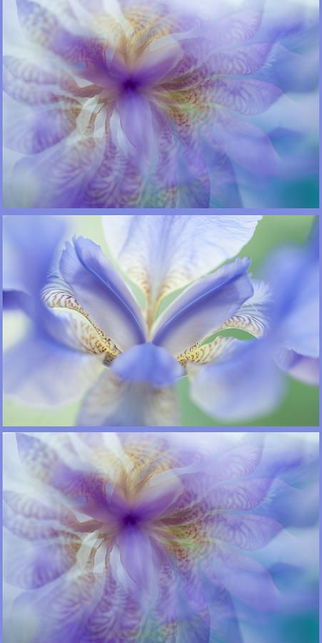 Ethereal Life Of Iris. Vertical Triptych by Jenny Rainbow