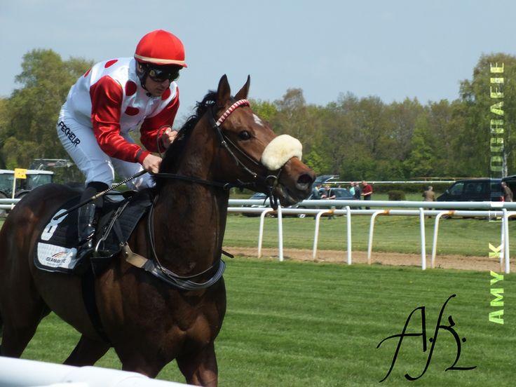 Legardère Sports Derby, Jockey Maxim P. auf Gläddis, Neue Bult, Langenhagen, 01.05.2016