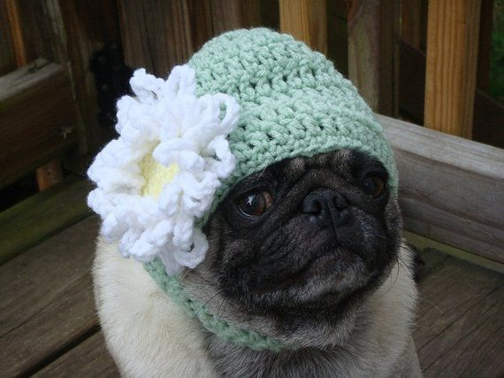 Birthday Puglet Has His Eye On The Prize Via Animalslovecake