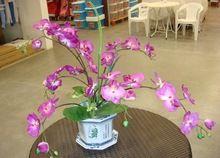 100pcs semillas de orquídeas rosadas Semillas de flores semillas de orquídeas semillas para casa a las Plantas de jardín decoración del hogar jardim con un regalo (China (continental))