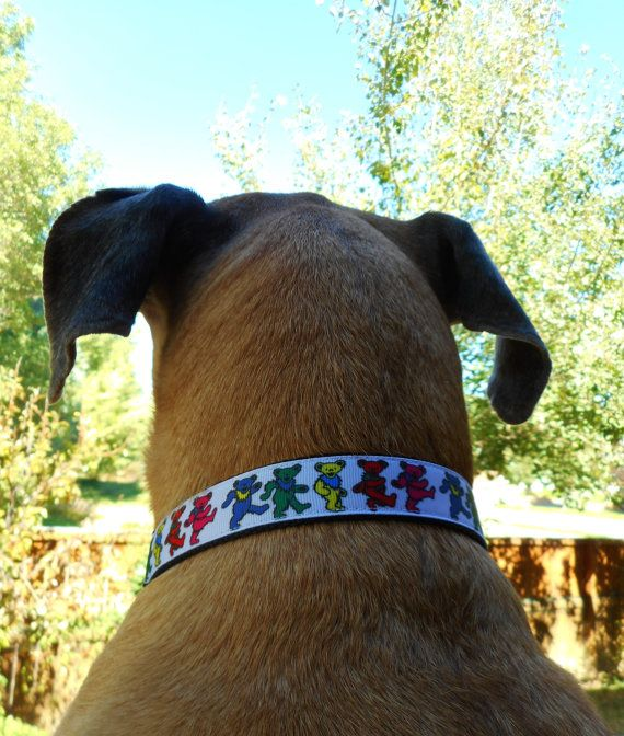 Dancing bears LED dog collar Deadhead grateful dead by bellaTAZ