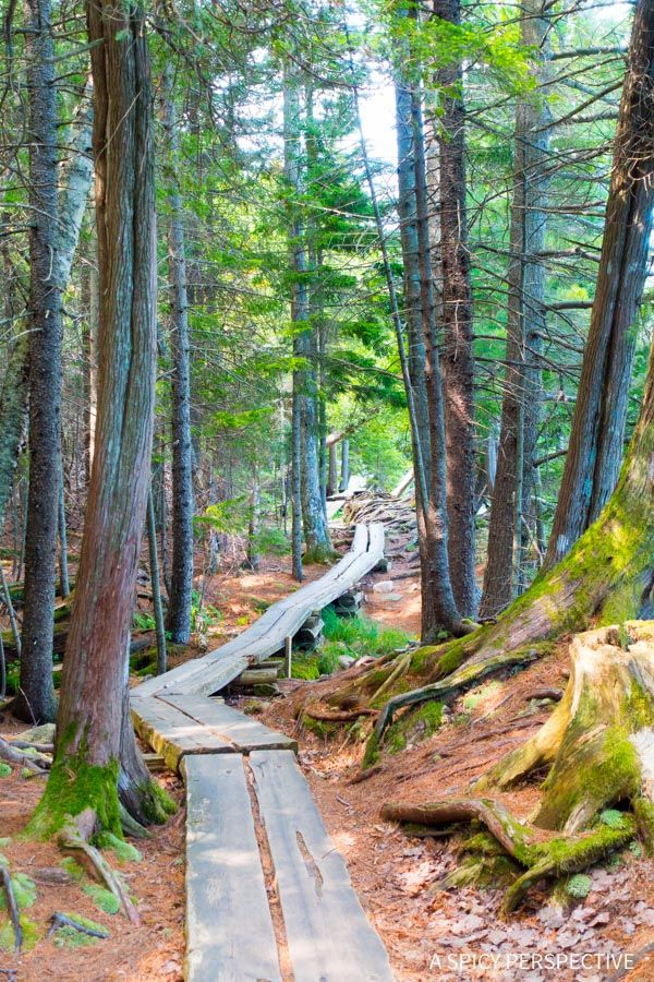 Jordan's Pond Trail in Acadia National Park Maine - on ASpicyPerspective.com #travel