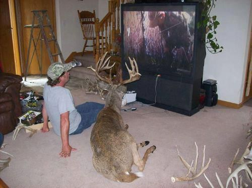 He stuffed the deer so it could watch hunting shows with ...