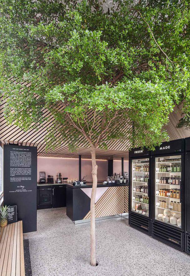 Магазин с деревом внутри в Амстердаме