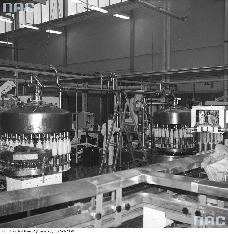 Linia produkcyjna do nalewania mleka w butelki.