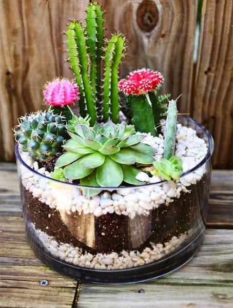 Las 25 mejores ideas sobre jardines peque os en pinterest Jardineras de cactus