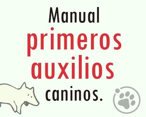 MANUAL PRIMEROS AUXILIOS CANINOS. https://www.facebook.com/notes/orbita-pets/amigos-orbita-petsmanual-primeros-auxilios-caninos/548132905330336