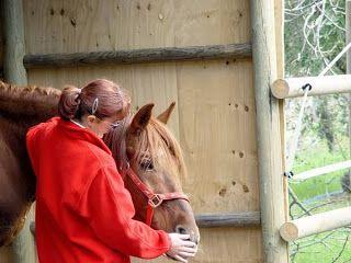 #cavallo #creaturamagica #intelligenza #sensibilità  Tendenzialmente: Il cavallo, creatura magica dai poteri straordinar...