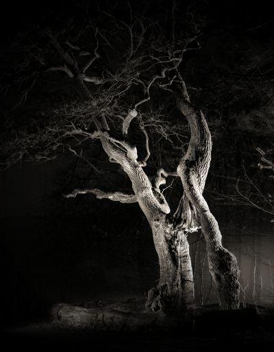 fotokurs thüringen nachtfotografie alte bäume lichtmalerei naturfotografie