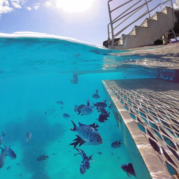 Lady Musgrave Island, Queensland, Australia - Just keep swimming ...