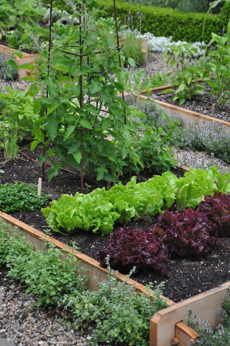 Mejores 241 im genes de huertos caseros en pinterest for Fotos de jardines caseros