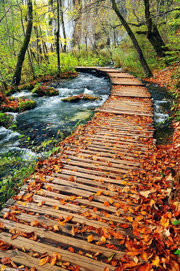 Autumn Path in Plitvice Lakes National Park, Croatia