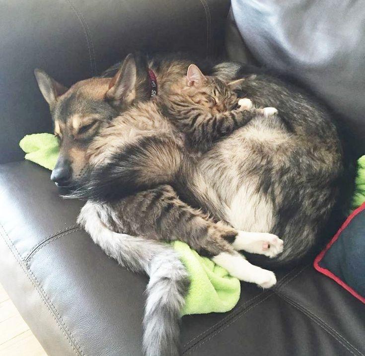 Un chiot choisit un chaton dans un refuge… et devient son meilleur ami !