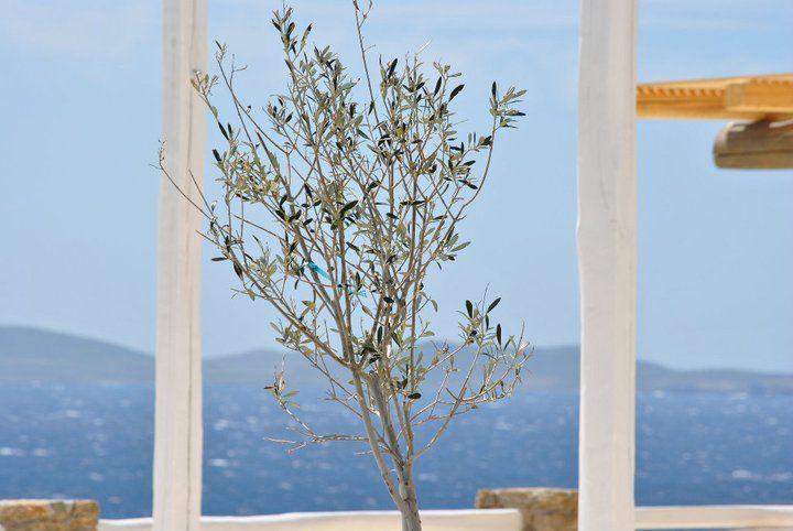 @ Rocabella Mykonos Art Hotel & SPA !!!
