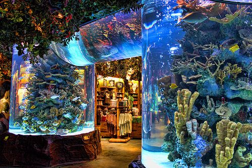 My favorite place to eat has always been the Rainforest Cafe.
