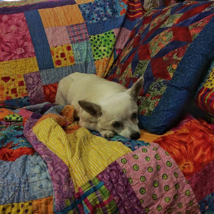 This little dog lights up my world! #Pixxie #ilovemydog #quiltingfriendsarethebest