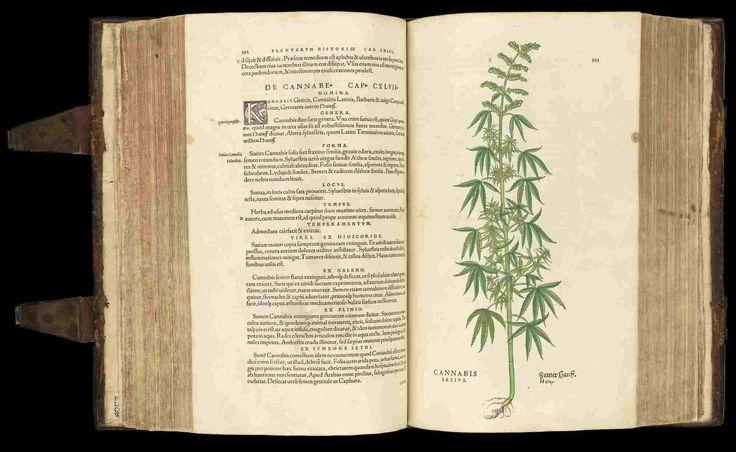 BioMed CBD Schweiz, der Online-Shop für Cannabidiole. Medizinisches Marihuana, Hanf, Setzlinge, Hanföl, Blüten, Samen, Liquids, Extrakt & Wachs.