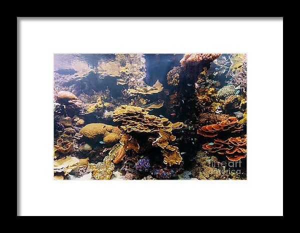 Small Coral Fish In Aquarium Framed Print