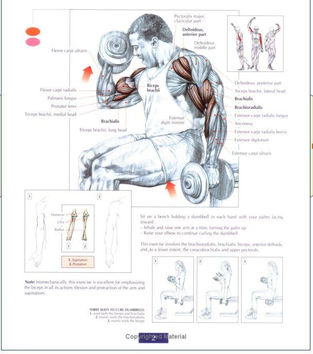 Fantastic Strength Training Anatomy By Frederic Delavier Picture ...