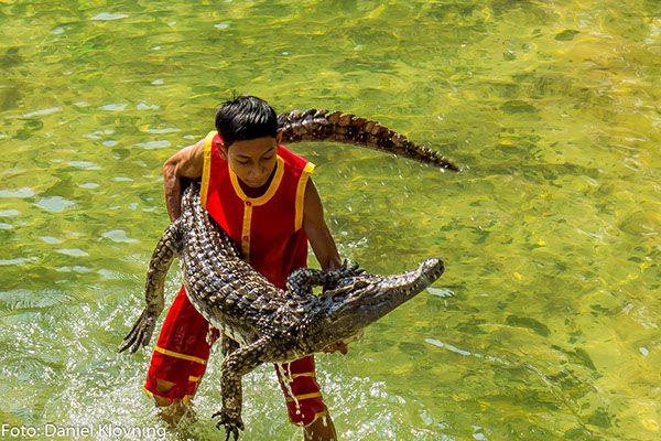 Man vs Crocodile, by Daniel Klovning on Behance