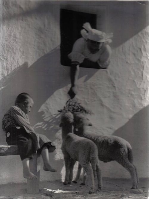 Lamb Feeding - Photo by Vadas Ernő. Hungarian (1899 - 1962).