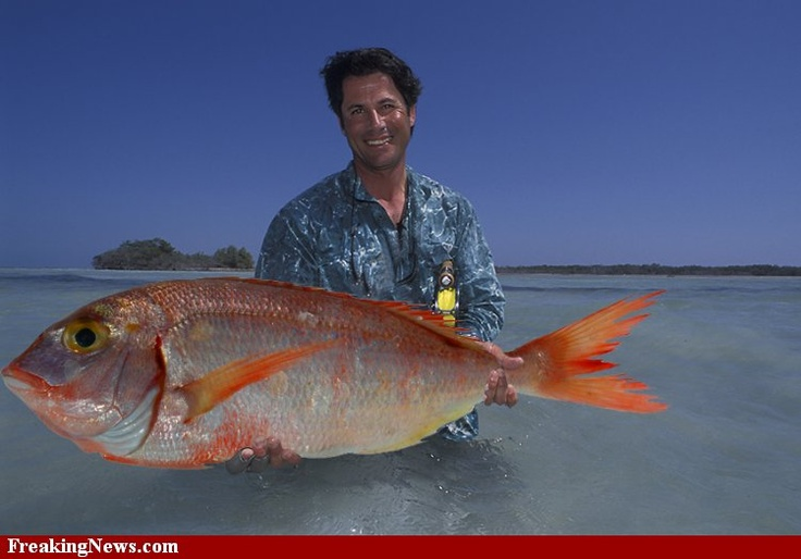 117 best images about oceans lakes and everything between for Edible hawaiian fish