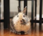 how to take care of a rabbit indoors